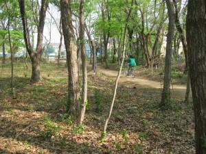 自宅近所にあるふれあいの森