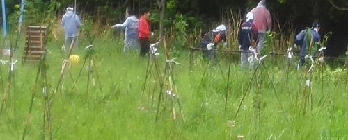 東北各地でボランティアらが取り組む植樹活動に提供