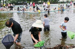 船橋市営プールでの恒例ヤゴ救出イベント