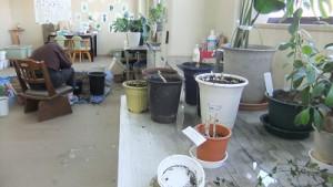 室内に置く植物や花を育てるのも利用者