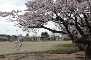 公園の土は全部はぎ取られている 浪江町