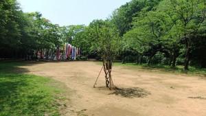 広場の真ん中に桜の幼木が出現